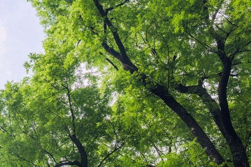 Natürlicher Rohstoff Wald