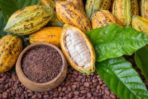 Kakaofrucht und Bohnen