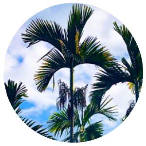 Verpackungsmaterial Palmblatt